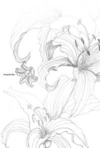 chupets lily+ 2