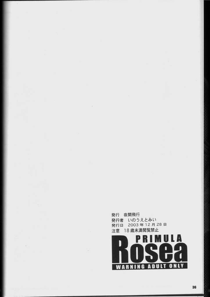 PRIMULA Rosea 34